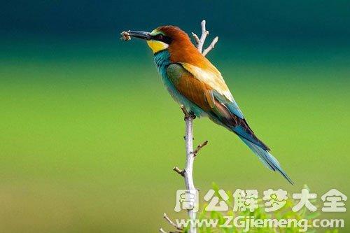梦见鸟是什么意思