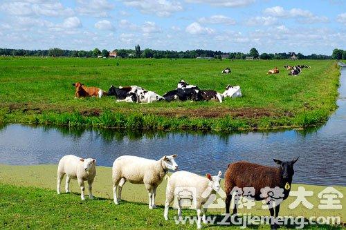 梦见羊和牛