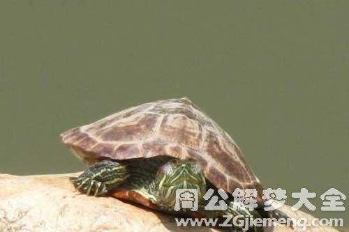 梦见乌龟爬