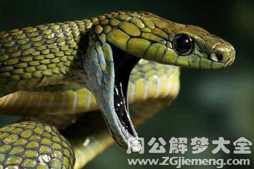 梦见蛇攻击