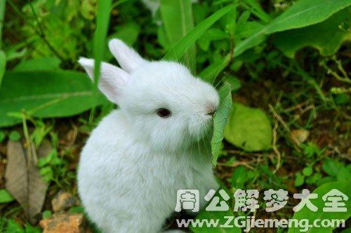 梦见兔子是什么意思
