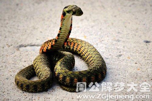 首页 动物 老是梦见蛇咬我    很多人在梦中会老是梦见蛇咬我.
