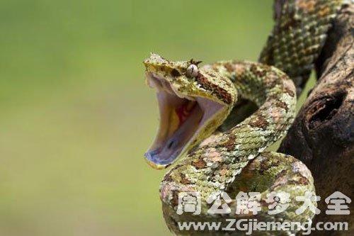 小蛇追着咬我