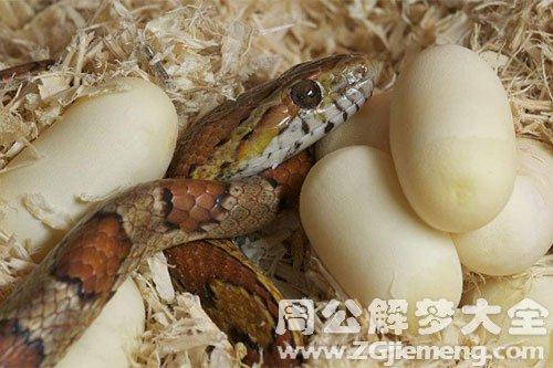 梦见很多蛇蛋