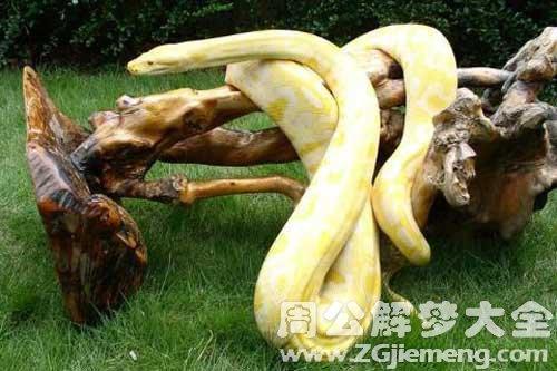 梦见金色的小蛇