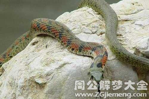 梦见蛇爬墙