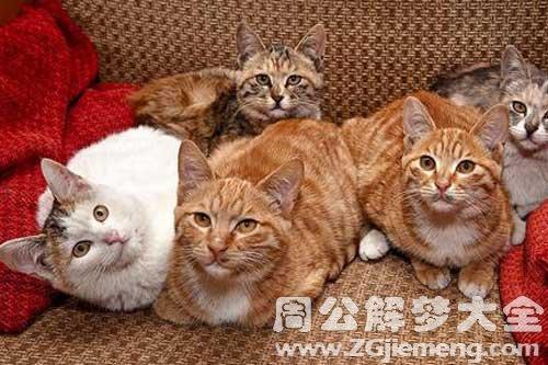 梦见一堆小猫