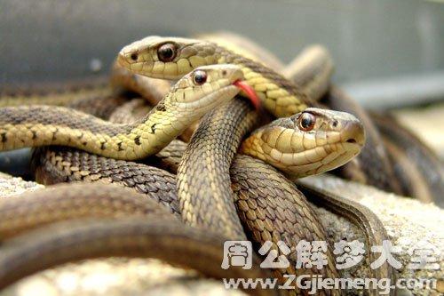 自己看见蛇