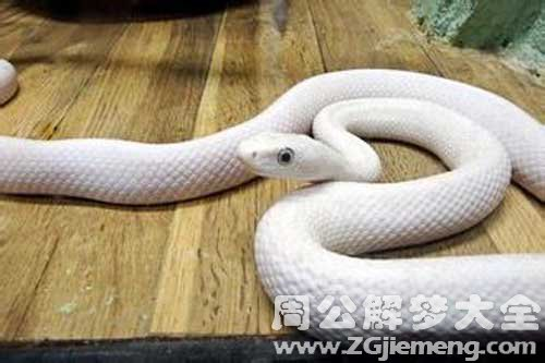 梦见白色的大蛇是什么意思_梦到白色的大蛇好不好