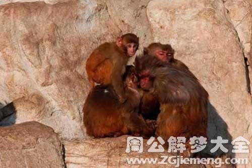 孕妇梦见抱猴子