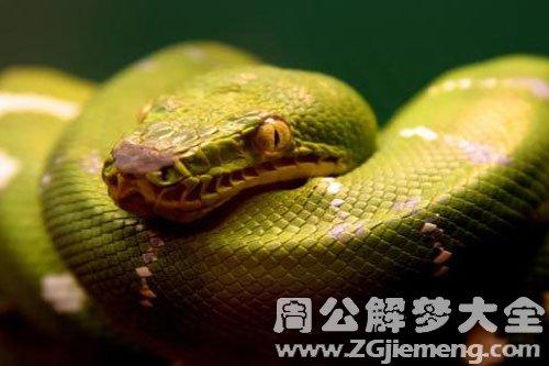 蛇在家门口