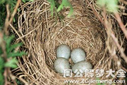 梦见吃鸟蛋