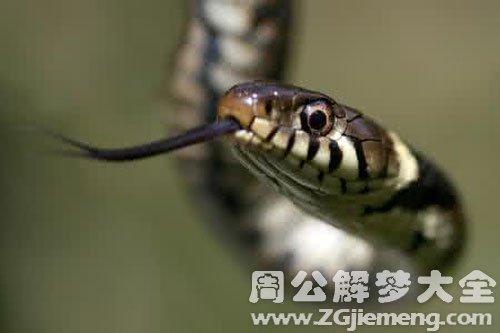 一屋子的蛇