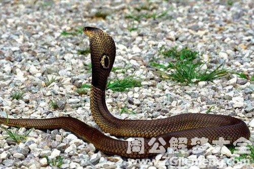 蛇把它打死了