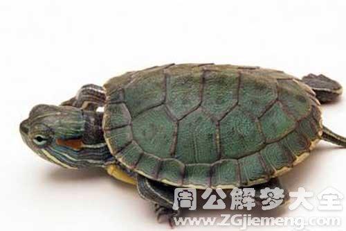 梦见一只小乌龟