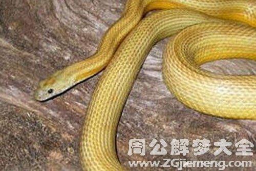 黄色的大蛇