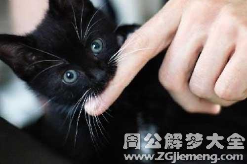 梦见猫咬出血