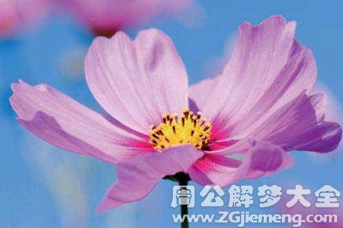 梦见很多的花