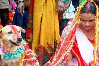 不可思议的印度:18岁女子竟与流浪狗成婚