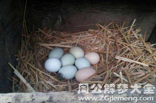 梦见捡鸭蛋和鹅蛋