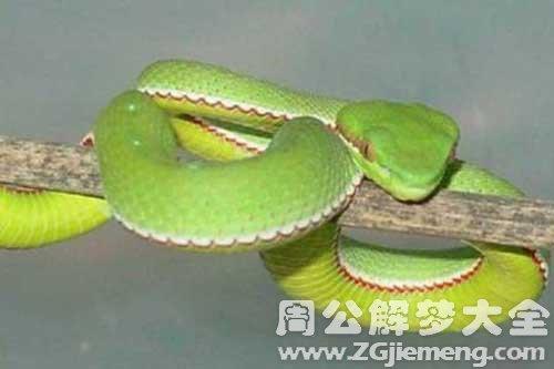 孕妇梦见细长的蛇