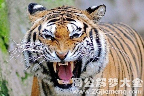 被老虎咬伤