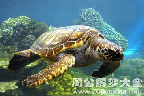 大龟在水里游