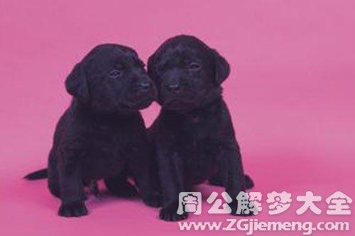 两只小黑狗