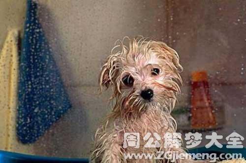 梦见给狗狗洗澡
