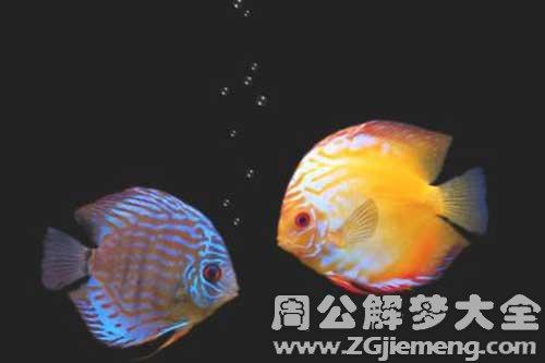 梦见捉了两条鱼是什么意思