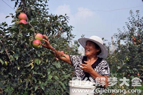 从树上摘果子