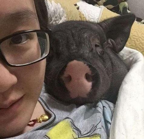 不堪入目!美女与猪同床共枕