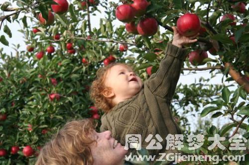 自己摘苹果
