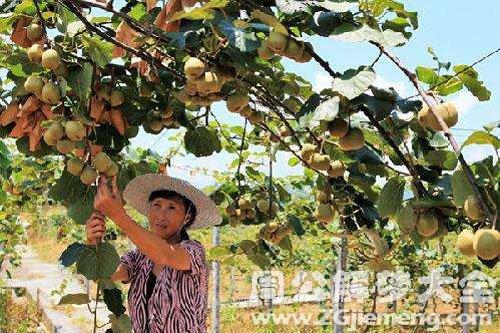 摘树上的果子吃