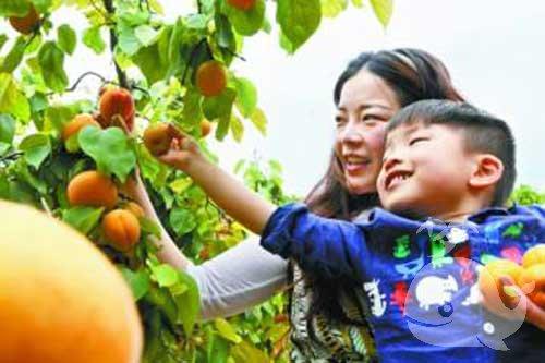 梦见摘杏子什么意思