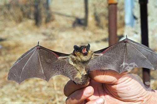 梦见被蝙蝠咬手